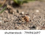 ant carrying a big seed | Shutterstock . vector #794961697