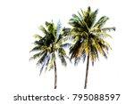 coconut tree on white background   Shutterstock . vector #795088597
