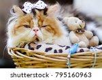 cute persian cat in rettan... | Shutterstock . vector #795160963