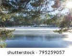 sunshine light through conifer... | Shutterstock . vector #795259057
