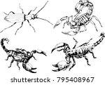 vector drawings sketches... | Shutterstock .eps vector #795408967