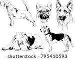 vector drawings sketches... | Shutterstock .eps vector #795410593