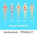 cartoon color human anatomical... | Shutterstock .eps vector #795436117
