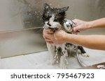 professional cat grooming in... | Shutterstock . vector #795467923