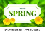 hello spring background with... | Shutterstock .eps vector #795604057