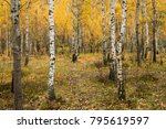 autumn forest. the morning  a... | Shutterstock . vector #795619597