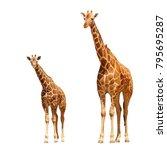 reticulated giraffes   mother... | Shutterstock . vector #795695287