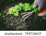 gardening  weeding weeds....   Shutterstock . vector #795718657