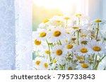 beautiful bouquet of camomiles...   Shutterstock . vector #795733843