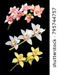 collage of orchid flowers... | Shutterstock . vector #795744757