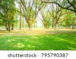 park and the sun lighting... | Shutterstock . vector #795790387