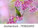 beautiful bird chestnut flanked ...   Shutterstock . vector #795810493