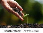 hands of farmer growing and... | Shutterstock . vector #795913753