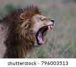 Lion Yawn In The Masai Mara...