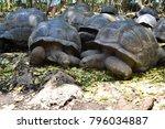 giant tortoises on prison... | Shutterstock . vector #796034887