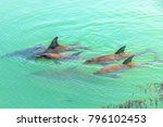 A Group Of Dolphins Swimming I...