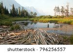 dead wood at marsh pond on the... | Shutterstock . vector #796256557