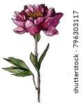 peony illustration  flower ... | Shutterstock . vector #796303117