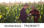 busy agriculturist team of...   Shutterstock . vector #796383877