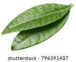 mango leaf isolated on white... | Shutterstock . vector #796391437