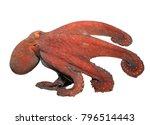 live underwater octopus... | Shutterstock . vector #796514443