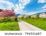 a bright joyful day in the... | Shutterstock . vector #796531687