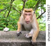 aggressive monkey protects a... | Shutterstock . vector #796543117