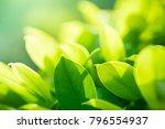 closeup nature view of green... | Shutterstock . vector #796554937