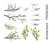realistic set of tree branches... | Shutterstock .eps vector #796582363