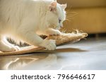 beautiful white persian cat and ... | Shutterstock . vector #796646617