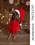 dog russian toy terrier.... | Shutterstock . vector #796711747