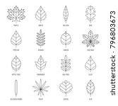 leaves types with names outline ... | Shutterstock .eps vector #796803673