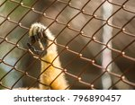 Monkey Catches A Cage  In A Zo...