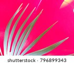 palm leaves and shadows... | Shutterstock . vector #796899343