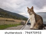 cat on a car in the outdoor | Shutterstock . vector #796970953