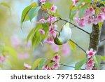beautiful bird chestnut flanked ...   Shutterstock . vector #797152483