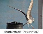 the big seagull | Shutterstock . vector #797244907