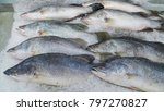 Small photo of White snapper in supermarket.