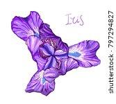 purple iris flower on a white... | Shutterstock . vector #797294827