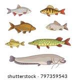 Freshwater Fish   Set Of...