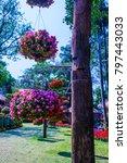 landscape of mae fah luang... | Shutterstock . vector #797443033