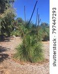 native bush western australia | Shutterstock . vector #797447293