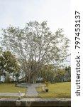 the landmark of tree | Shutterstock . vector #797453137