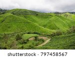 tea plantation  cameron... | Shutterstock . vector #797458567