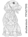 adult coloring book page a cute ... | Shutterstock .eps vector #797657593