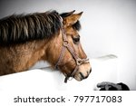 brown horse in a stable with a... | Shutterstock . vector #797717083