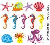 set of sea animals starfish ... | Shutterstock .eps vector #797804683
