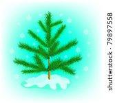 Evergreen Tree Fir Tree In...