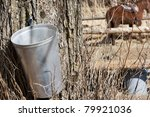 Maple Sap Bucket To Harvest Sa...
