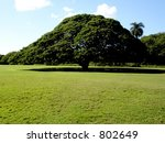 hawaiian savannah tree | Shutterstock . vector #802649